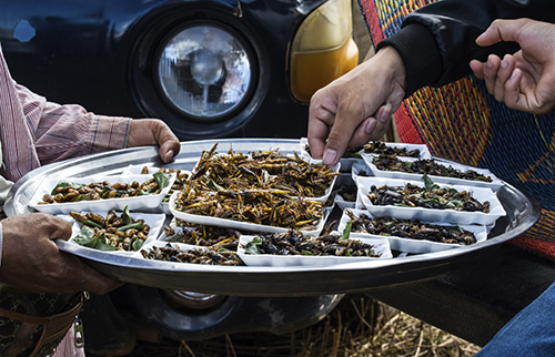 Eating insects is a potential way to reduce carbon footprints, a vital aspect of the climatarian diet