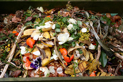Fresh bio-waste and compost
