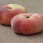 donut peach- dressed up basics - thrive