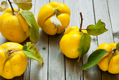 Quince-thrive!-sized-iStock-174588227