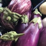 eggplant-thrive!-sized-eggplants-IMG_4217 2