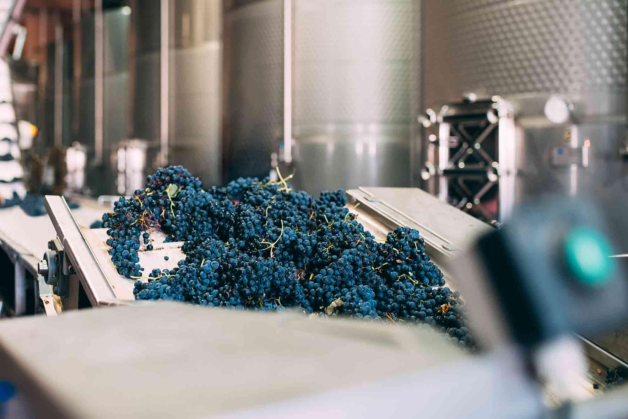 modern winery machine with grapes wine vegan