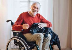 A disabled senior man in wheelchair indoors playing with a pet service dogs