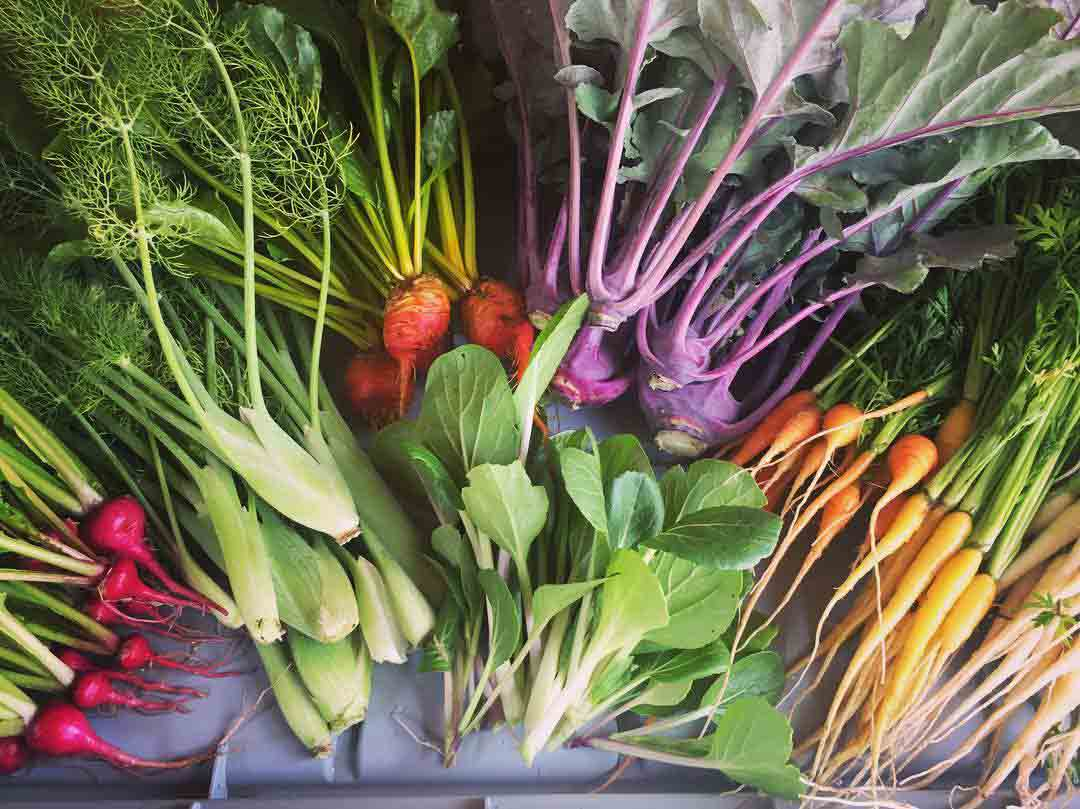 Dickinson Farm vegetables community CSA